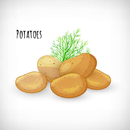 Whole unpeeled potatoes, dill twig in flat style. Vegetable organic eco bio farm product. Lettering Potatoes. Potato fresh raw vegetable image. Vector illustration on white background.