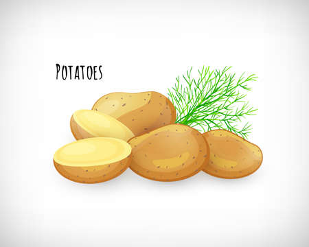 Potatoes whole, half, unpeeled, dill twig in flat style. Vegetable organic eco bio farm product. Lettering Potatoes. Potato fresh raw vegetable image. Vector illustration on white background. Illustration