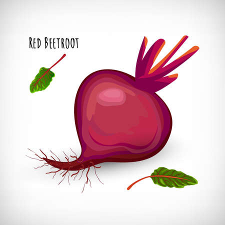 Whole red beetroot plant isolated on white background. Healthy diet vegetarian food. Salad ingredient in flat style. Red Beetroot lettering. Vector illustration. Illustration