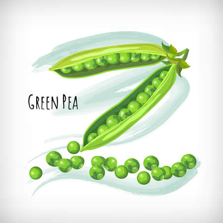 Green pea in flat style on watercolor background. Vegetable organic eco bio farm products. Green Pea lettering. Hand drawn image. Vector illustration.