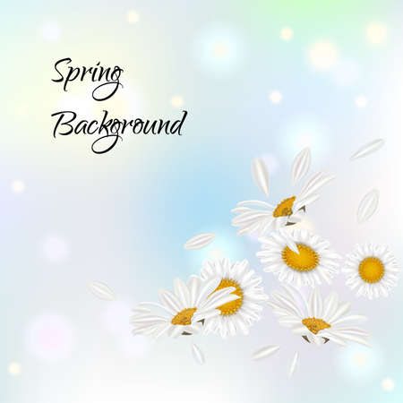Nature theme banner with camomile flowers and flying petals . Camomile design with text Spring Background. Vector illustration.
