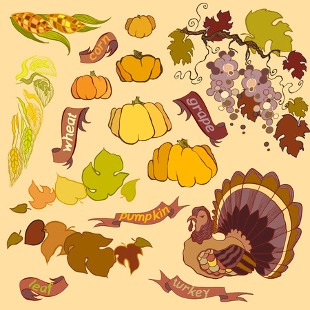 wheat isolated: Thanksgiving elements set with turkey, pumpkin, corn, grape and wheat isolated on light background Illustration