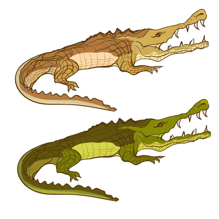 Crocodile green and brown. Vector cartoon image isolated on white background. Illustration