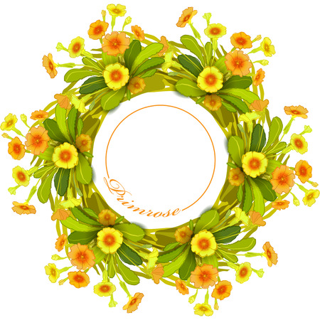 primrose: Spring summer floral wreath. Border frame with yellow primroses and green leaves. Yellow orange floral background and text primrose. Floral circle frame on white background isolated Illustration
