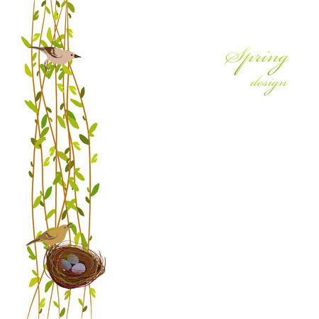 willow tree: Spring background with willow tree branches, nest, birds and eggs. Vertical border with osier twigs and green leaves on white background isolated. Green tree twigs frame design Vector illustration