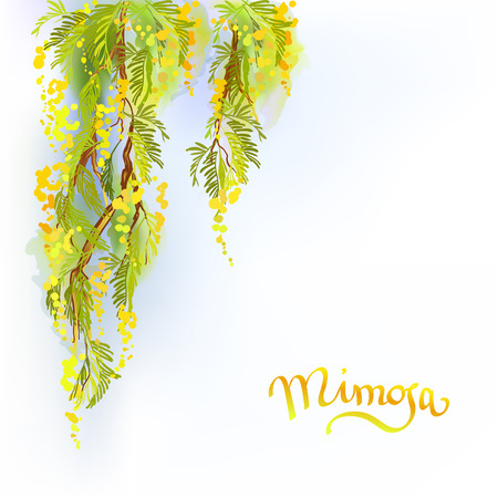 wattle: Yellow mimosa or acacia spring flowers verical garland on white blue background. Hand drawn floral yellow green border gesign and mimosa text. Sunny watercolor sketch background. Vector illustration. Illustration