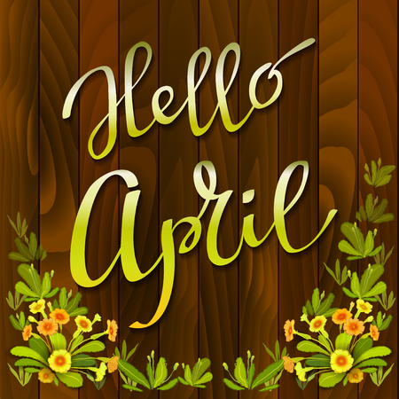 primula: Spring hand drawn calligraphy card - hello april. Orange yellow primrose flowers, green leaves on brown wooden texture background. Floral border frame and vector lettering. Red wood boards background Illustration