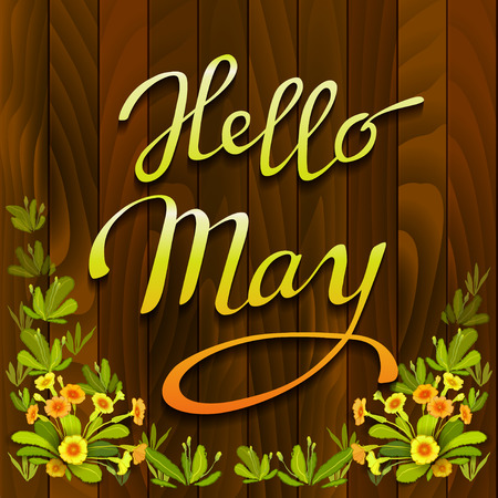 primula: Floral hand drawn calligraphy card - hello May. Spring orange yellow primrose flowers, green leaves on brown wooden texture background. Floral border frame and vector lettering. Wood boards background