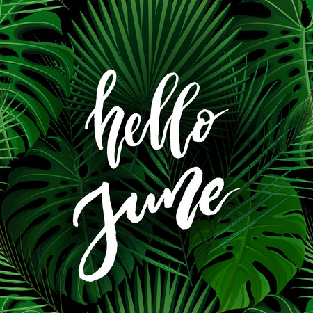 Hello June brush lettering. Vocation cards, banners, posters design. Green palm tropical leaves background. Handwritten modern brush pen calligraphy. Vector illustration stock vector.