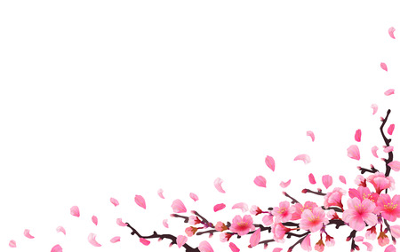 Realistic japan cherry branch sakura with blooming flowers. Spring fresh pink design on white background. Flying downwind petals on wind. Horizontal corner design. Vector illustration stock vector.