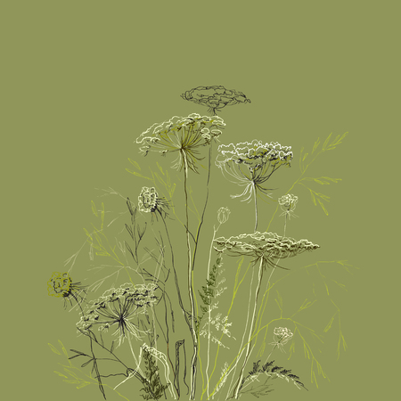 Realistic botanical hand drawn green herbs. Summer sketch hand drawn linear meadows herbs plant dill or fennel. Floral vector illustration stock vector. Ilustração