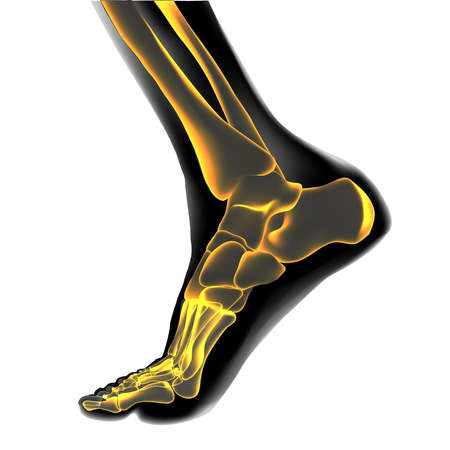Visualization of bones of foot. Anatomy of joints, human leg realistic black and yellow transparente skeleton. Medial aspect view. For advertising or medical orthopedic web sites. Vector illustration stock vector. Ilustrace