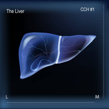 Realistic human liver and gallbladder scanning illustration on dark blue background. For liver pain or diseases medical publications or hepatoprotective advertising. Vector illustration stock.
