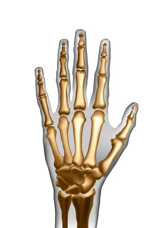 Frontal top view image of bones the of hand. Imagens - 137756056
