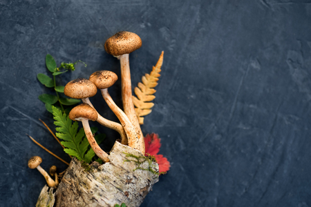Decorative composition of mushrooms, birch bark and forest leaves on a dark concrete background. minimalism Top view