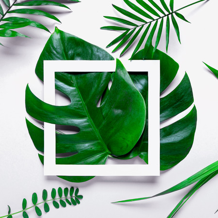 Monstera leaves summer minimal background with a space for a text, flat lay, view from above.