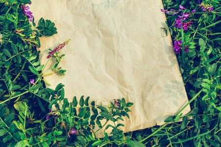 Creative natural background of plants and craft paper. The concept of eco-friendly materials