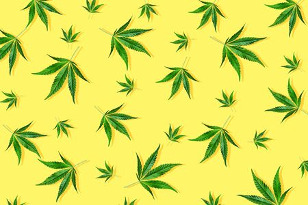Trendy sunlight CBD pattern with green leaf cannabis on a light yellow background. Minimal CBD OIL concept
