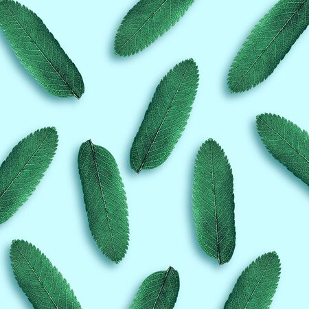 Pattern of leaves on a blue background. Natural background concept. Flat lay, minimalism.