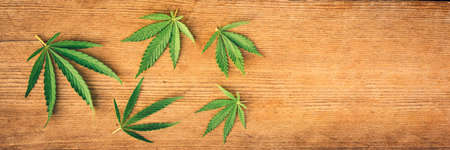 Cannabis leaves, mariuana in different sizes on a wooden background. Copy space, banner, flat lay