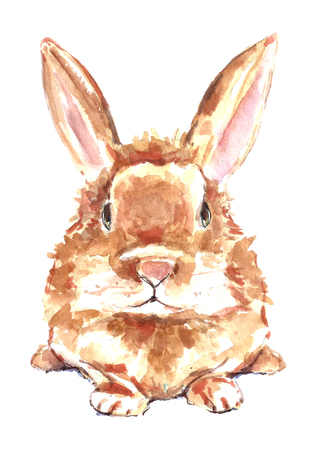 Watercolor orange rabbit.