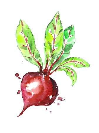 remolacha: Watercolor beet.