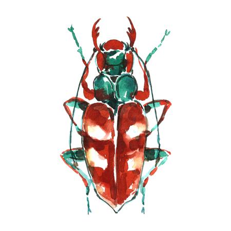 braun: watercolor braun bug.