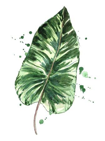 Watercolor green tropical leaf with splashes. Фото со стока