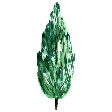 Watercolor green cypress. Stock Photo