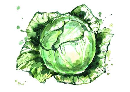 水彩緑キャベツ。 写真素材