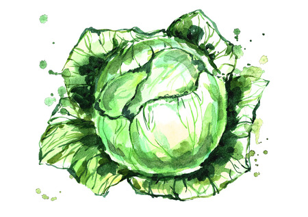 Watercolor green cabbage. Stock Photo