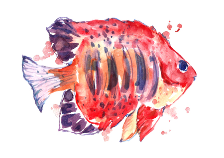 Watercolor red fish. Stock Photo