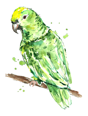Watercolor green parrot. Stock Photo