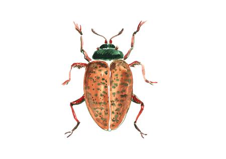 Watercolor brown beetle.