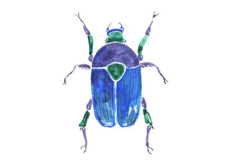Watercolor blue beetle.