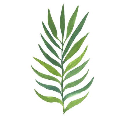 Watercolor palm leaf.