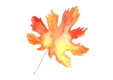 Watercolor maple leaf. Фото со стока