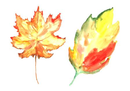 Watercolor autumn leaves.
