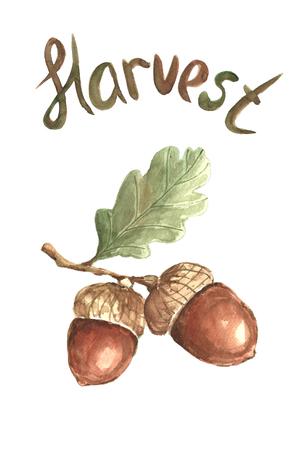 Watercolor acorn. Фото со стока