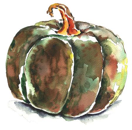 Watercolor green pumpkin.