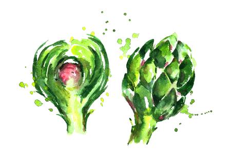 Watercolor artichoke slice. Фото со стока