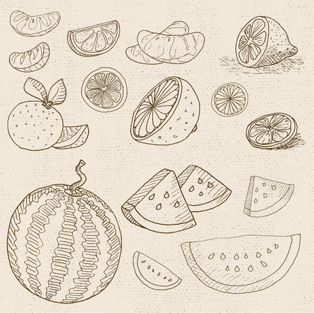 borscht: Set of chalk sketch hand drawn, in sketch style, food and spices, old paper textured background. Fruit set watermelon, lemon, orange, mandarin, grapefruit, sliced. Hand drawn illustration.