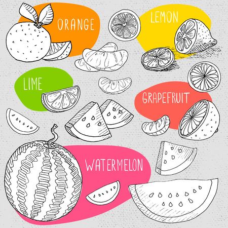 borscht: Set of stickers in sketch style, food and spices, old paper textured background. Fruit set watermelon, lemon, orange, lime, grapefruit, sliced. Hand drawn vector illustration.