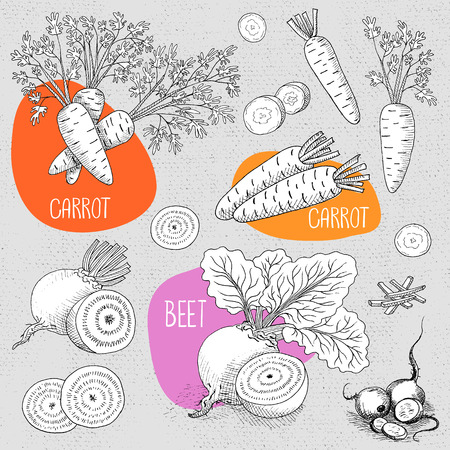 borscht: Set of stickers in sketch style, food and spices, old paper textured background. Vegetable set beet with leaves, sliced ​​beets, carrots with leaves, sliced ​​carrots. Hand drawn vector illustration.