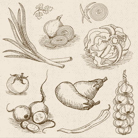 turnip: Set of chalk sketch hand drawn, in sketch style, food and spices, old paper textured background. Eggplant, onions, cabbage, garlic, tomato, pepper, radish, turnip, beets.