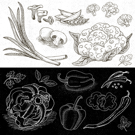 borscht: Set of chalk hand drawn, in sketch style, food and spices, black and white chalkboard background. Vegetables set cabbage, cauliflower, green onions, mushrooms, bell pepper, bay leaf.
