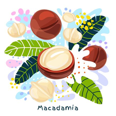 Fresh macadamia juice splash organic food condiment spice splatter. Spicy herbs nuts. Abstract colorful art splatter splash background. Vector hand drawn illustration
