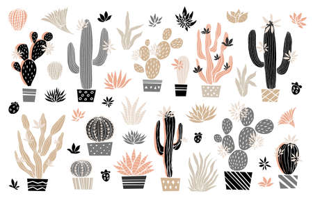 Cactus succulent wild rose flowers tender pink brown pastel color watercolor. Home plants beautiful cacti succulents collection. Hand drawn vector illustration