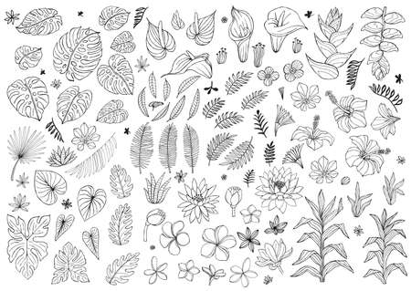 Set of abstract tropical plants, flowers, leaves. Vector design isolated elements. Wildlife sketch black floral jungle. Rainforest white background. Hand drawn vector illustration