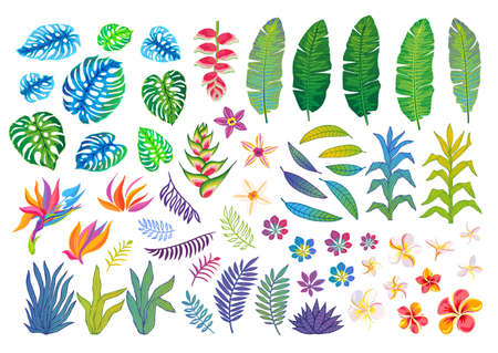 Set of abstract tropical plants, flowers, leaves. Vector design isolated elements. Wildlife colorful floral jungle. Rainforest art background. Hand drawn vector illustration Ilustrace